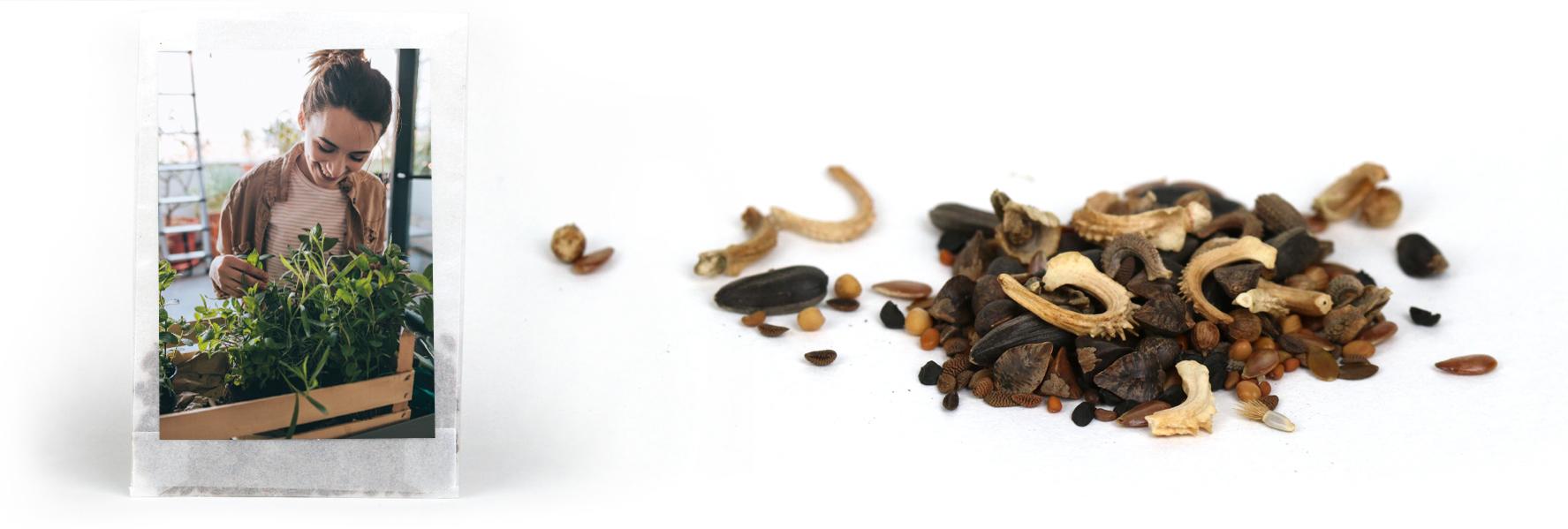 Beispiel von einem Samentütchen